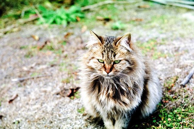 an island cat