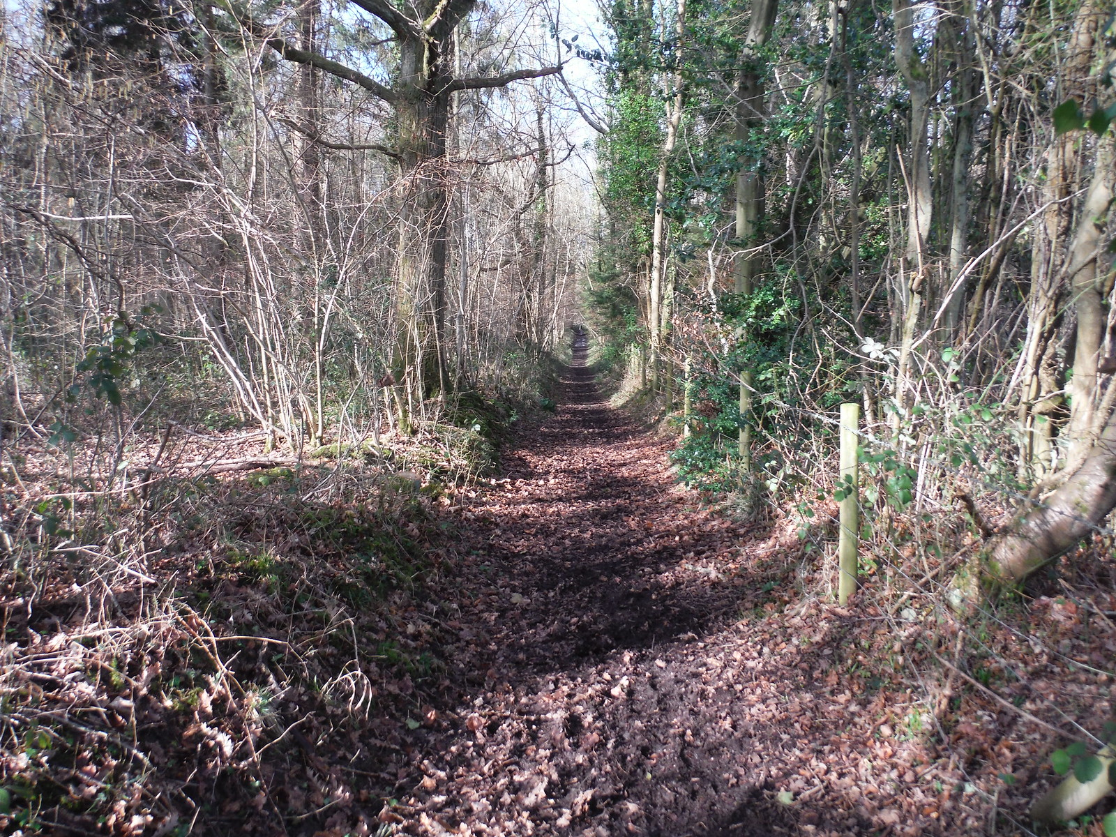 Path in Greyfield Wood, Beenham SWC Walk 117 Aldermaston to Woolhampton (via Stanford Dingley)