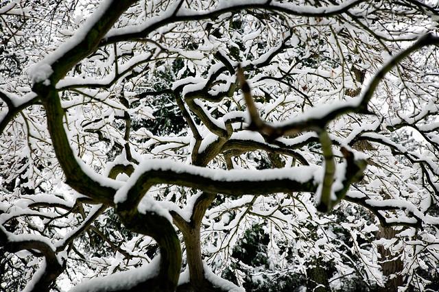 snowed tree