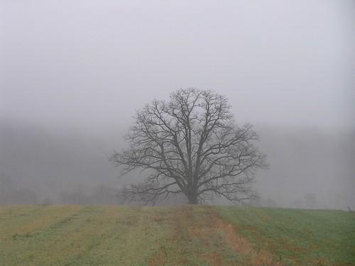 fog landscape pennsylvania dauphincounty powellsvalley