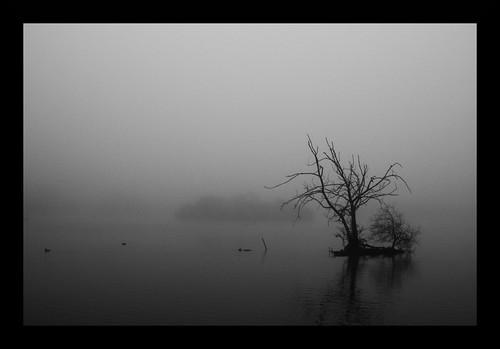 Fog | by rutty