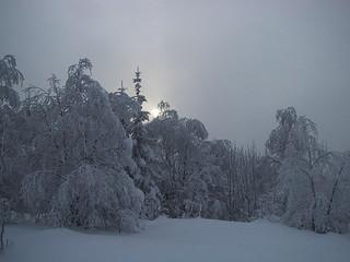 Vinterdag i Vestmarka   by randihausken