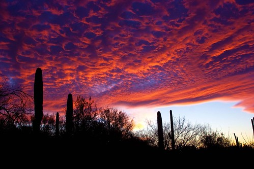 sunset arizona cactus sky night clouds cacti desert tucson cloudy dusk mesquite saguaro saguaronationalpark