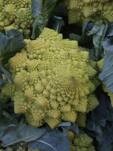 Fibonacci cauliflower | by Julio Martinez