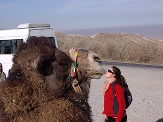 Camel Kisser | by sebr