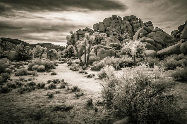 Desert View IR - Textured Duotone