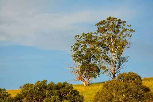 landscape nikon australia d750 newsouthwales aus firefly waukivory
