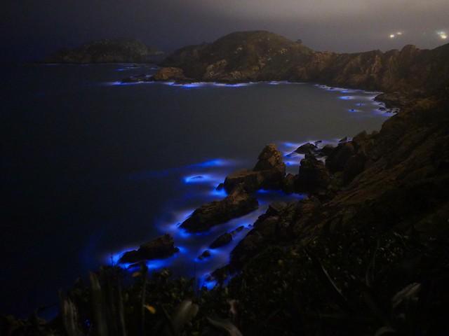 藍眼淚 blue sand 夜光虫