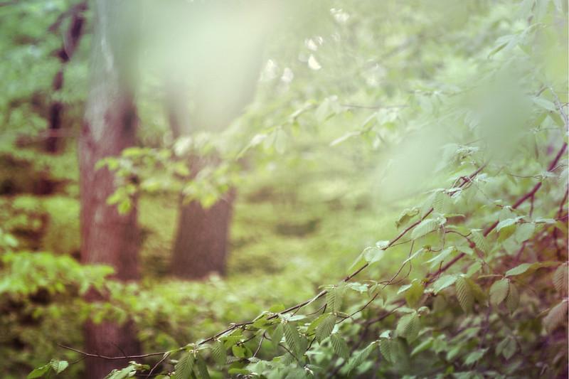 blur-dreamy-texture-texturepalace-40
