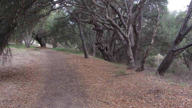 IMG_8092 Goleta Dos Pueblos glen annie area oaks