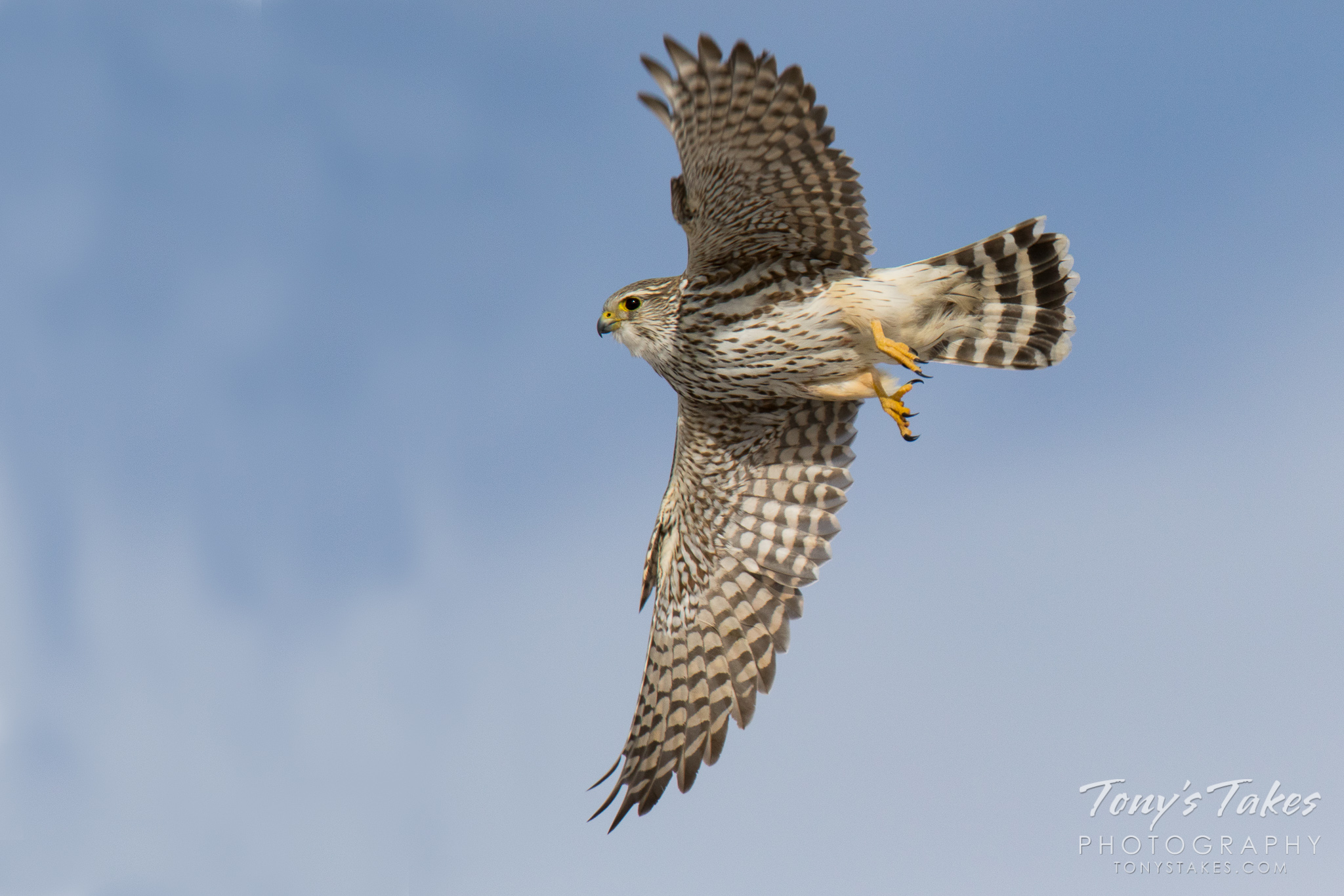 Merlin takes a magical flight