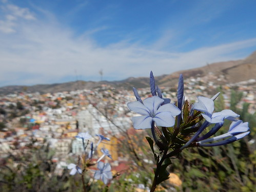 Guanajuato - bloem