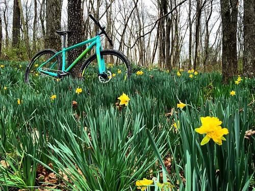 Nothing says Spring like daffodils and Easter blue bikes! #lostvalleytrail #trekbikes #superflyss #singlespeed | by ericfrazier