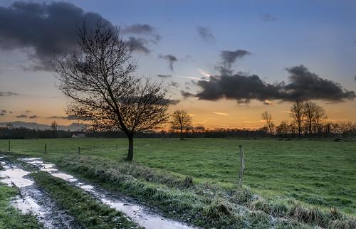 sunset sky tree nature clouds zonsondergang sonnenuntergang natur wiese natuur himmel wolken landschaft baum landschap