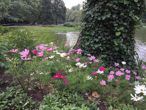 Flowers in the park | by Rachel Cotterill