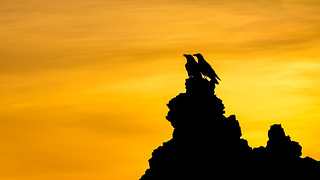 Ravens | by mhx