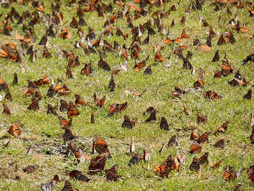 Reserva Mariposa Monarca - 1