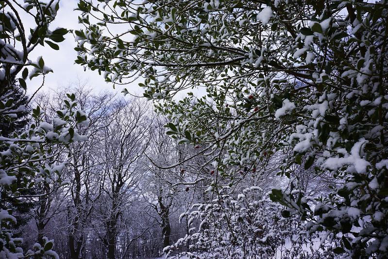 Vinterhave-midtjanuar-2016 (3)