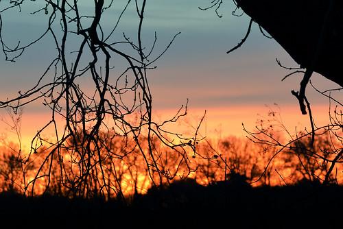 january winter season nature mothernature landscape leaves leaf tree trees forest woods woodlands nikon d800 nikond800 paulwilliams despitestraightlines flickr nikon200500mm nikkor200500mm nikon200500mmf56e grow getty gettyimages gettyimagesesp despitestraightlinesatgettyimages thetfordforestpark thetford thetfordpark norfolk suffolk countryside sunrise morning dawn sunlight thetfordforest ilobsterit