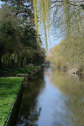 nature canal walk telephoto nottinghamshire walkies waterways chesterfieldcanal canalwalk nikoncameras wiseton nikond800 8004000mmf4556nikkor