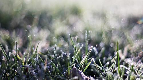pentax k5 smcpentaxm50mmf17 bokeh garden italy lazio frost outdoor field plant grass depthoffield dew stefanorugolo