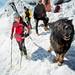 Lavínový pes vítal pretekárov našťastie nemusel nikoho zachraňovať, foto: Matej Rumanský