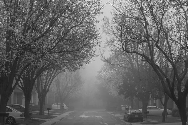 60/2016 - February Fog