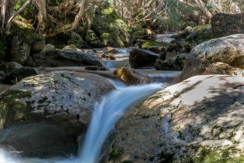 nature water creek forest canon river landscape geotagged photography waterfall nationalpark bush stream flickr australia nsw wilderness thredbo merritts kosciuszkonationalpark markbimagery