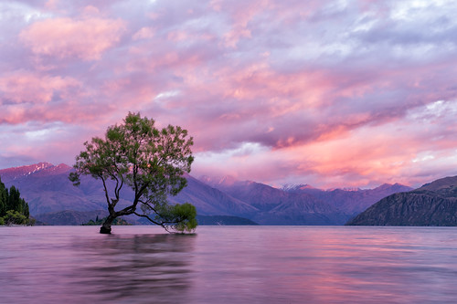 longexposure newzealand mountains reflection tree sunrise nikon df nz southisland otago southernalps wanaka lakewanaka thatwanakatree