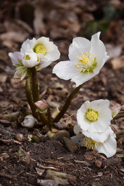 金, 2016-03-11 13:20 - Brooklyn Botanic Garden