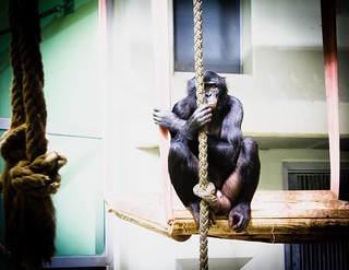Berlin#zoo#monkey#sguardi... | by si.silve