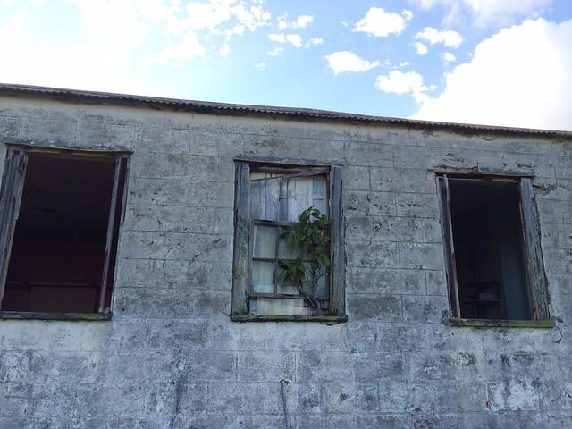 月, 2015-12-07 15:41 - 廃墟の窓に生える木