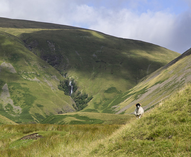 Cautley Spout and guardian, Howgill Fells near Sedbergh, Yorkshire Dales National Park, Cumbria, UK