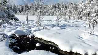 Snowy pond Käkilampi (Nuuksio national park, Espoo, 20160213)