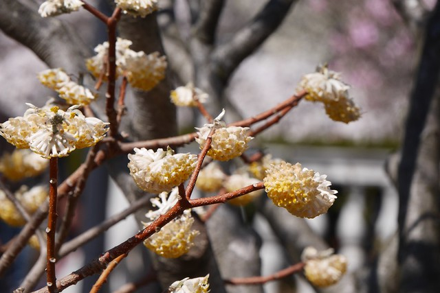 土, 2016-03-26 13:41 - Brooklyn Botanic Garden