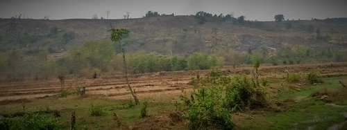Slashed and burned land