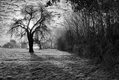 trees blackandwhite monochrome silhouette frost fuji fields fujifilm warwickshire barford x100s