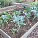 PKZ Community Garden Project