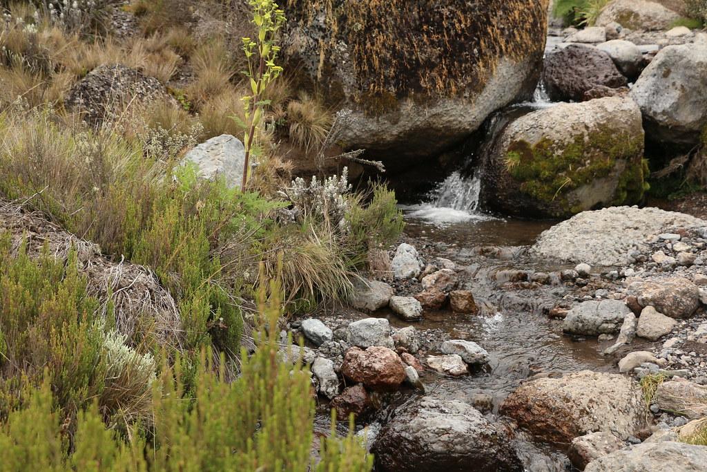 Machame Route, Kilimanjaro