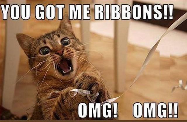 funny-cat-ribbons-meme-5942