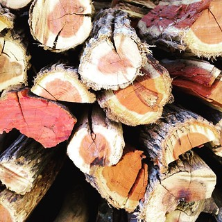 Ridiculously photogenic logs #stilllife #photographs #photography #iphone #mobilephotography | by kevinsmith19
