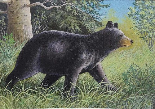 Illustration of black bear in the woods