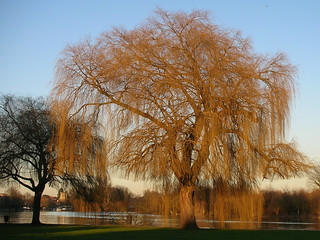 070203trees   by alanconnor