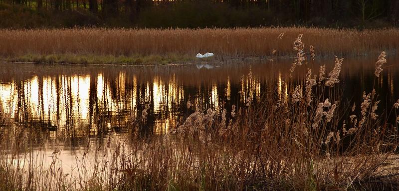 Golden pond.