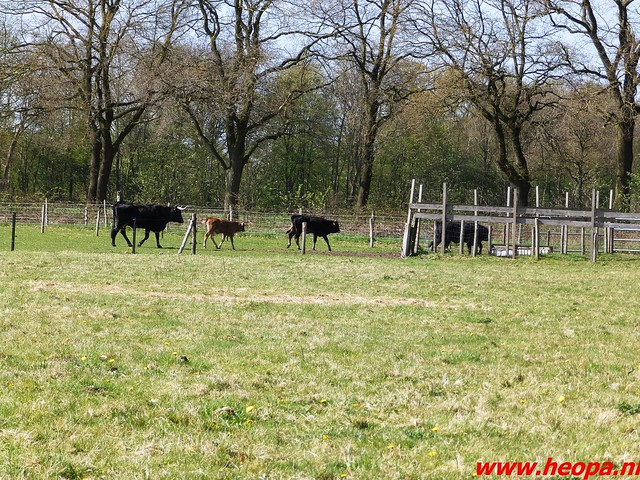 2016-04-20 Schaijk 25 Km   Foto's van Heopa   (53)