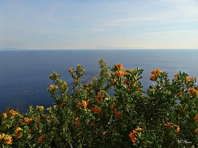 Flowers and sea!!!..Agrilia Loutra Lesbos Greece