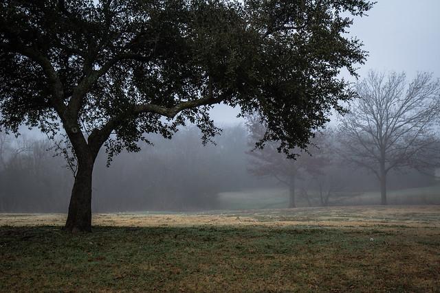 Fog Over Park