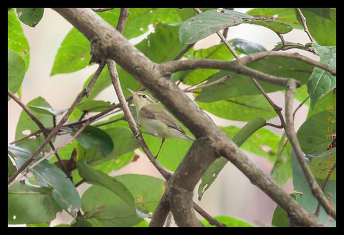 birds is ii usm eos50d ef100400mm f4556l canonef100400mmf4556lisiiusm ef100400mmf4556lisiiusm ganeshgudi2015 dandeli2015 ganeshgudi2015day2