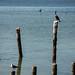 Aves por heldraug