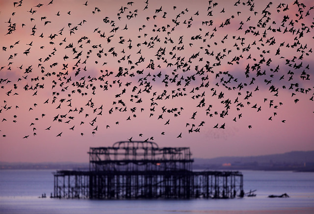 West Pier and Starling Murmuration